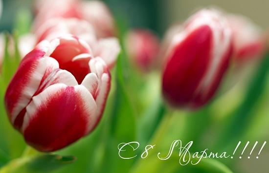 красивое поздравление с 8 марта