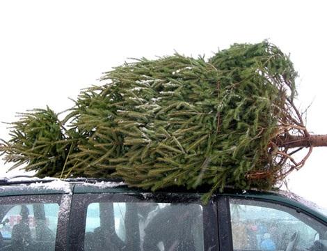 Искусственная или натуральная елка? Как выбрать елку
