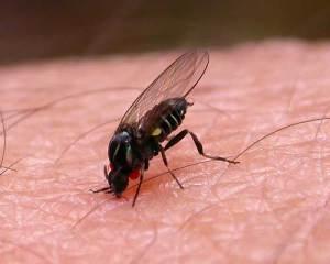 средства от укусов насекомых