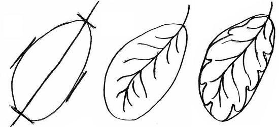 как нарисовать осенние листья