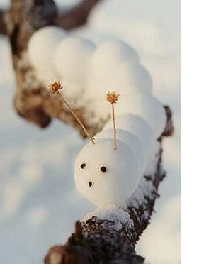 что такое снежколеп