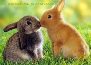 как ухаживать за кроликами и чем их кормить