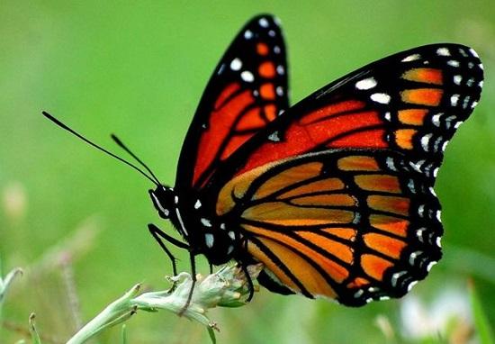 загадки про бабочек