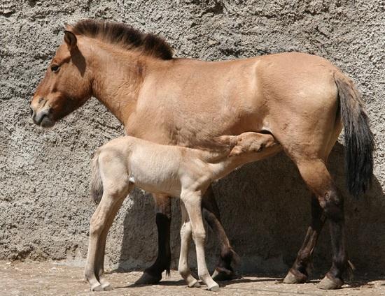одесский зоопарк фото