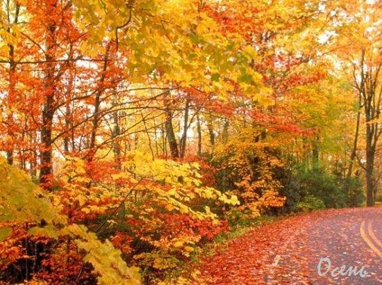 красивые стихи про осень