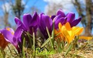 Загадки про весну для детей с ответами