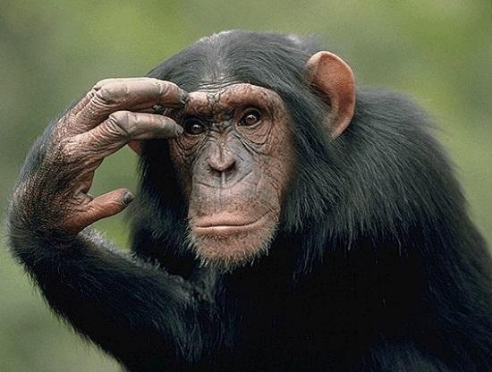 обезьяна гороскоп