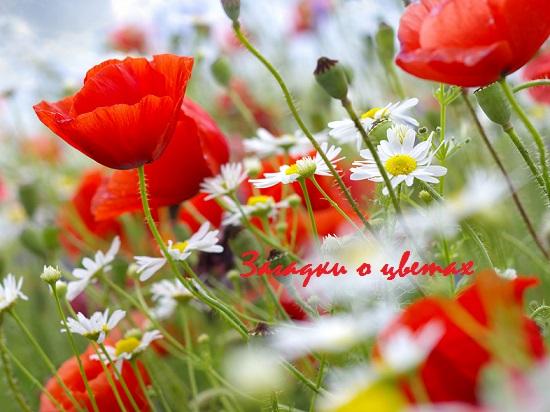 загадки о цветах