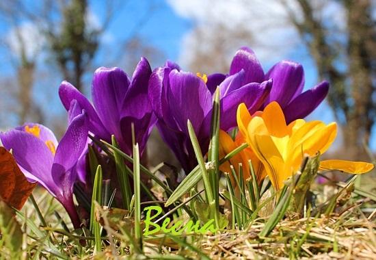 загадки про весну с ответами