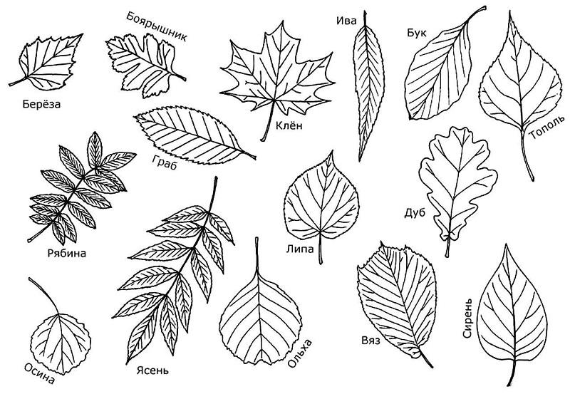 сделать осенние листья своими руками из бумаги